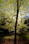 Pfalz_20120503_185210_DxO